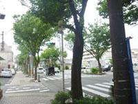 keyaki001-1.jpg