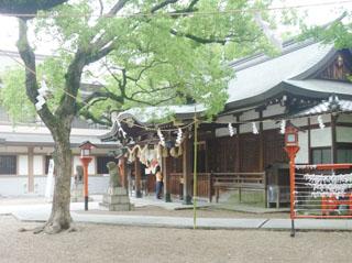 keyaki019.jpg