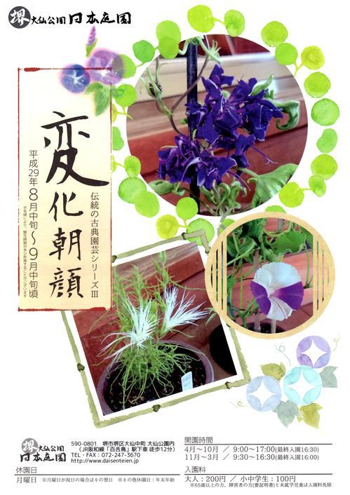 17_08_10_asagao01.jpg
