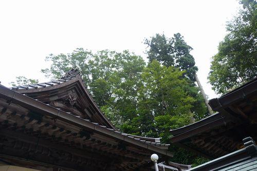 myouken2_02_buna01.jpg