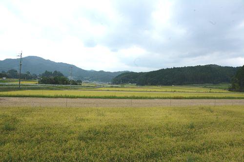 sinodanomori1_01_satoyama1.jpg